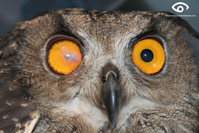 Vista frontal de ambos ojos